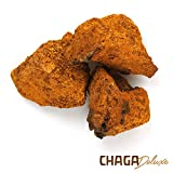 Chaga Deluxe© wilder Birkenporling Pilz als Kur - Unbehandelte Stücke/Brocken direkt aus sibirischen Wäldern - KEIN Pulver/Extrakt/Kapseln - TCM Tee (100g - 5-6 Monats Kur)