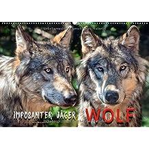 Wolf - Imposanter Jäger (Wandkalender 2018 DIN A2 quer): Es hat 150 Jahre gedauert, aber jetzt sind sie wieder da - Wölfe. (Monatskalender, 14 Seiten ) (CALVENDO Tiere)