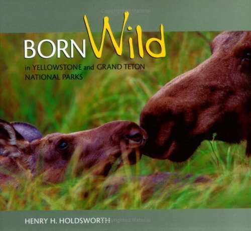 Born Wild in Yellowstone and Grand Teton National Parks by photography by Henry Holdsworth (2003-05-01)