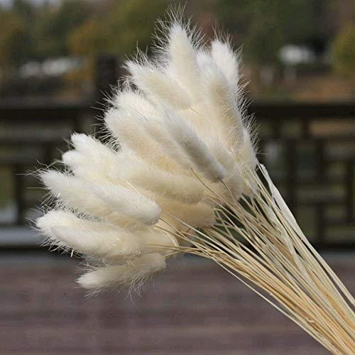 Huaesin 30pcs bouquet fiori secchi per decorazioni, fiori essiccati naturali per decorazioni fiori secchi per decorazioni casa balcone giardino autunno inverno natale