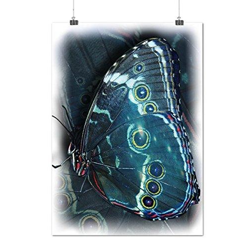 papillon-beaute-art-punaise-style-matte-glace-affiche-a2-60cm-x-42cm-wellcoda