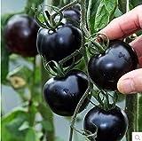 AUTFIT Semi di pomodoro perlato semi di ortaggi da frutto per balconi, giardino, cortile- 100 pezzi neri
