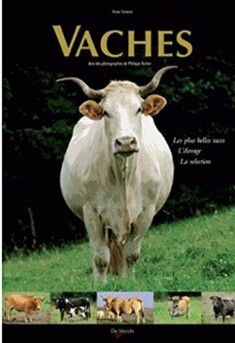 Vaches : Les plus belles races, l'élevage, la sélection