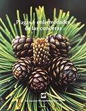 Plagasyenfermedadesdelasconíferas (Patología Vegetal)