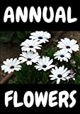ANNUAL FLOWERS: Annual flowes ( folower types ) ( flower pictures ) ( flower descriptions ) All about annual flowers )