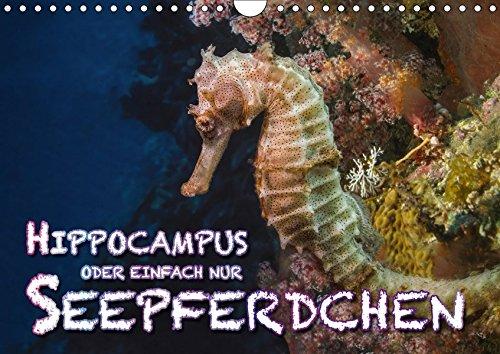 Hippocampus oder einfach nur Seepferdchen (Wandkalender 2018 DIN A4 quer): Seepferdchen sind beim Tauchen schwer zu entdecken und zu beobachten. ... ... [Kalender] [Apr 04, 2017] Gödecke, Dieter