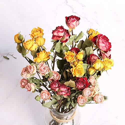 Tooget - bouquet di rose naturali essiccate, veri fiori secchi appena raccolti per fai da te, composizioni regalo e decorazione per scrivania, soggiorno, caffetteria, matrimonio