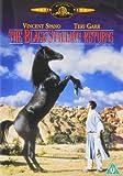 Black Stallion Returns The [UK Import]
