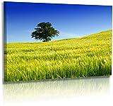 Fotoatelier Dirk Haas Premium Leinwandbild XXL - Natur -