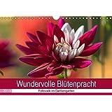 Wundervolle Blütenpracht - Fotowalk im Dahliengarten (Wandkalender 2019 DIN A4 quer): Ausgewählte Fotografien von wunderschönen Dahlien. (Monatskalender, 14 Seiten ) (CALVENDO Natur)
