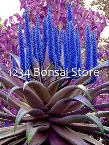 FARMERLY Pacchetto semi: Aloe bonsai 200 pezzi Vegetas e frutta bonsai pianta di aloe vera edi bellezza Edi cosmetici piante Bonsai per la casa & amp; Giardino: 15
