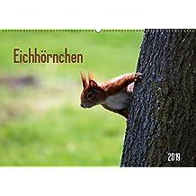 Eichhörnchen (Wandkalender 2019 DIN A2 quer): Gattung der Hörnchen-Familie (Monatskalender, 14 Seiten ) (CALVENDO Tiere)
