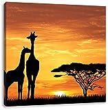 Giraffen im Sonnenuntergang, Format: 70x70 auf Leinwand, XXL riesige Bilder fertig gerahmt mit Keilrahmen, Kunstdruck auf Wandbild mit Rahmen, günstiger als Gemälde oder Ölbild, kein Poster oder Plakat