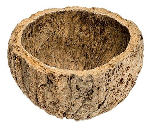 NaDeco® Qurico natur ca.7-10cm | Ourico Madeira Cup | Paranussschale | Schale der Paranuss | Bertholletia excelsa | exotische Dekoration