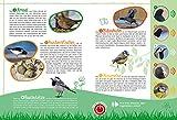 Vögel in unserer Natur: Soundbuch mit 35 Vogelstimmen - Eva Wagner