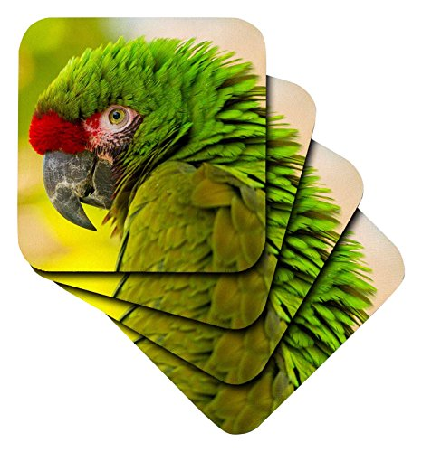 Danita Delimont–Papageien–USA, Kalifornien, Santa Barbara. Profil des Aras bei Santa Barbara Zoo.–Untersetzer, Gummi, set-of-4-Soft