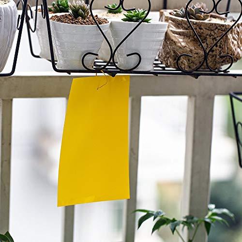 10 pcs jaune mouche piège double face, 15 * 20cm autocollants en papier collant contre les aleurodes, pucerons, moucherons et mineuses des feuilles