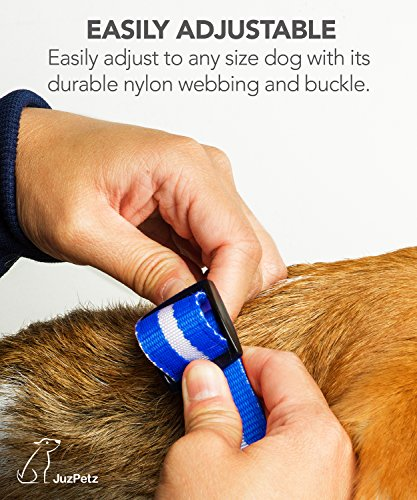 JuzPetz Rechargeable LED Dog Collar, Reflective Flashing Visible Collar [Water Resistant | 3 Glow Modes] Adjustable Light-Up Pet Safety Collar with USB Charging Cable 4