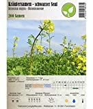Semi di erbe - Senape nera - Brassica nigra/Sinapis nigra - Brassicaceae 200 Semi