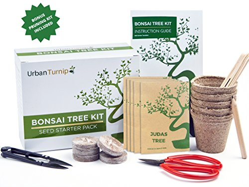 Bonsai Tree Kit Grow Your Own Bonsai Trees from Seeds – Gardening Gift Set Includes 5 Tree Species to Plant – Indoor Growing with Bonus Bonsai Tools Included