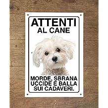 Amazonit Cane Maltese