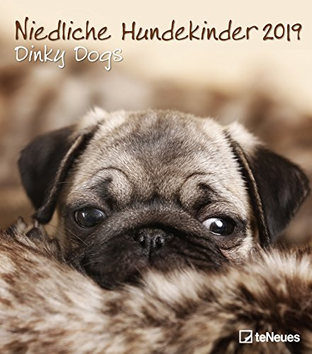 Niedliche Hundekinder 2019 - Broschürenkalender, Hundekalender, Tierkalender 2019 - 30 x 34 cm