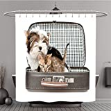 Duschvorhang 270440546Biewer Yorkshire Terrier und Bengal Katze sitzend in eine bag. isoliert auf weiß Polyester-Hintergrund-Bad Vorhang
