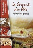 Le Serpent des Blés : Pantherophis Guttatus