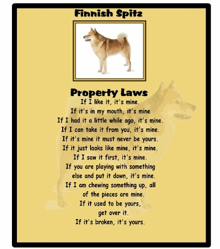 magnetsandhangers Finnish Spitz – Property Laws – Mouse mat