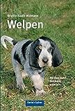 Welpen: Mit dem Hund durch das erste Jahr