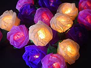 Old English Purple Mixed Colour Rose Fairy Light String