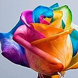 Regenbogen Rose 20 Samen - Mehrfarbenrose Bunte Rose - Rosensamen Geschenk für Verliebte Geburtstagsgeschenk