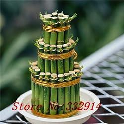 Venta caliente de la venta! 100pcs / bag chino raro Semillas de bambú de la suerte 20 variedades Semillas Bonsai árbol del jardín pueden producir nuevas plantas contra la radiación