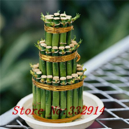 Galleria fotografica Vendita Vendita calda! 100pcs / bag cinese raro semi di bambù fortunato 20 varietà Bonsai Semi Garden Novel piante Anti-Radiation