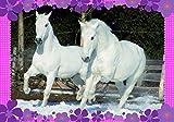 Ma pochetet de posters - Fan de chevaux Sophie Talmann