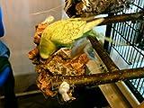 Kork Knabberbar – Tolles Vogelspielzeug gegen Langeweile im Vogelkäfig - 7