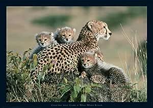 #13546 91x61cm Raubkatzen Geparden Kenya Poster Plakat Tiere