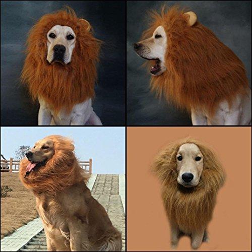 LHWY Löwe Mähne für Hund Kostüm mit Geschenk Löwe Schwanz Löwe Perücke für Hund (Gesamt Paket Kostüm)