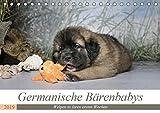 Germanische Bärenbabys (Tischkalender 2019 DIN A5 quer): Zauberhafte Welpenbilder von Germanischen Bärenhunden. (Monatskalender, 14 Seiten ) (CALVENDO Tiere)
