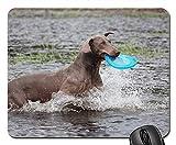 Gaming-Mauspads, Mauspad, Weimaraner Animal Dog Schnauze Wasser nass Pelzwasser