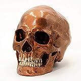 Cranstein - Crâne humain, 2pièces, Grandeur nature (couleur cuivre) - A-526