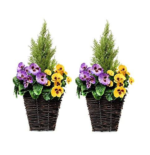 GreenBrokers Zuchtset Künstliche Terrasse Pflanzgefäßen–Lila & Gelb Blumen & Konifere/Zeder Formschnitt (Outdoor-zeder Möbel)
