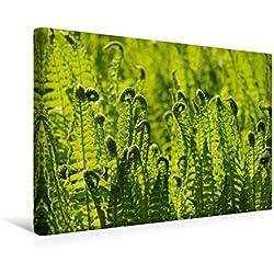 Calvendo Premium Textil-Leinwand 45 cm x 30 cm Quer, Farn | Wandbild, Bild auf Keilrahmen, Fertigbild auf Echter Leinwand, Leinwanddruck: Wildpflanzen und Pflanzen Natur Natur
