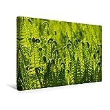 Calvendo Premium Textil-Leinwand 45 cm x 30 cm Quer, Farn   Wandbild, Bild auf Keilrahmen, Fertigbild auf Echter Leinwand, Leinwanddruck: Wildpflanzen und Pflanzen Natur Natur