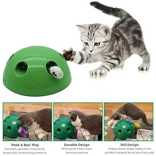 knowledgi N Play Interaktive Bewegung Katzenspielzeug - Automatisches Katzentrainingsspielzeug Und Interaktives Federspielzeug, Pet Entertainment Intelligence Fun (Grün)
