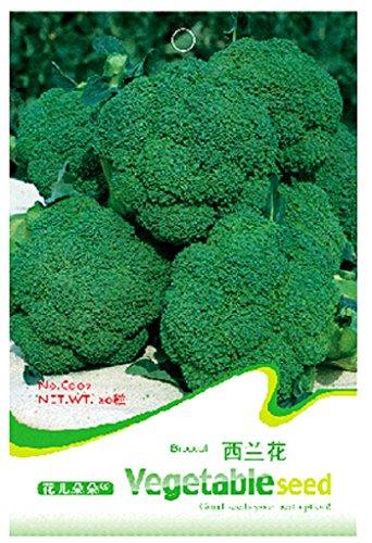 50 Samen von Brokkoli Kohl – Brassica Oleracea L – Ver – Italica Plenck – Brokkolisamen in Originalverpackung Vegetal – Broccoli Kohl