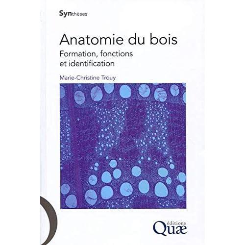 Anatomie du bois: Formation, fonctions et identification.