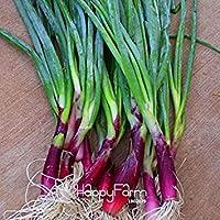 Vista Vente!Four Seasons Red petites graines d'échalote, graines de légumes délicieux jardin sementes da fruta - 10pcs / Bag, K1SJL6