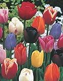 200 Tulpenzwiebeln Mischung Blumenzwiebeln