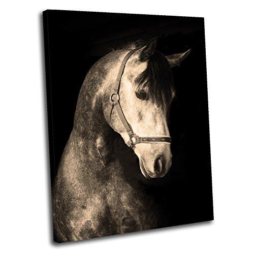 Tela cultura-Cavallo Bianco Stampa Artistica con cornice,